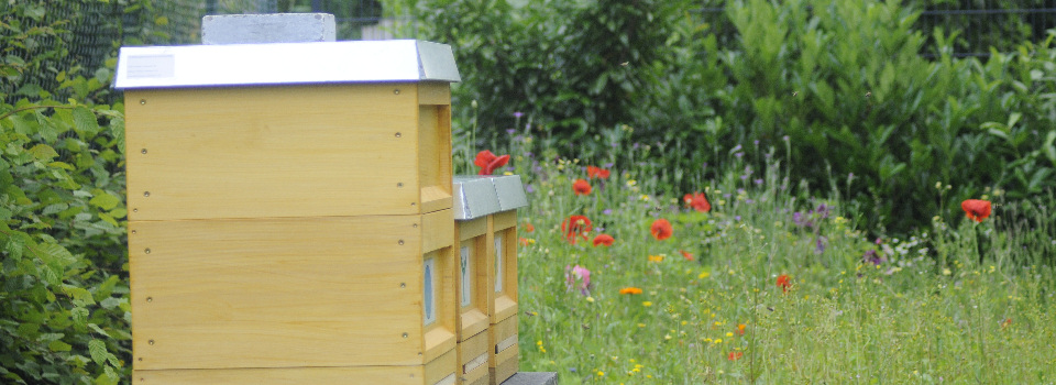Original Bettrather Bienenhonig